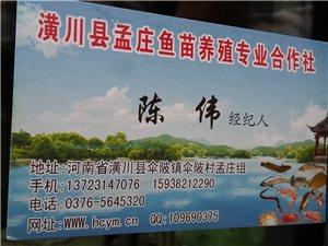 各種規格及品種魚苗