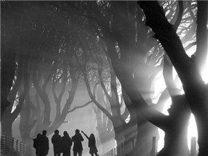 最美的风景 2013景观摄影获奖作品集