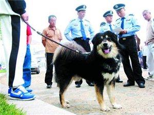 澳门网上投注官网明年有望为规范养犬立法