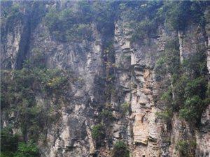 (召集2014年元月1日)利川清江古河床清理活动