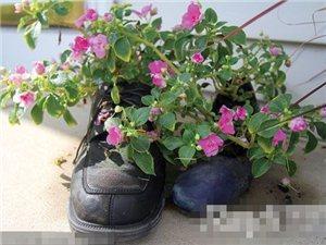 废弃物品变花盆 再展环保时尚力