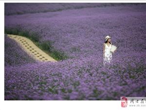[贴图]紫色依花-摄影无止境