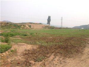 以下图片是后韩庄村,废弃砖厂占用过的土地,至今无人耕种,