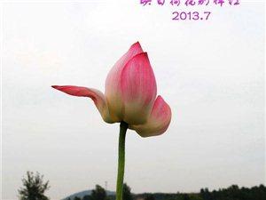 荷之韵   2013.7