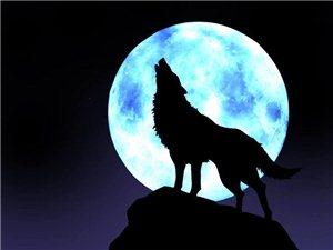 狼与狗的区别!