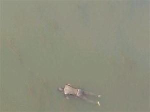 [原创]淅川二桥下发现男尸,