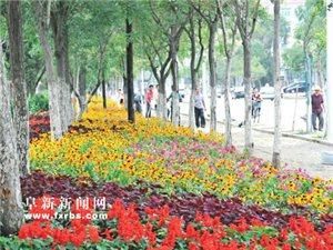 我市主要街路及大小广场各种花卉竞相开放