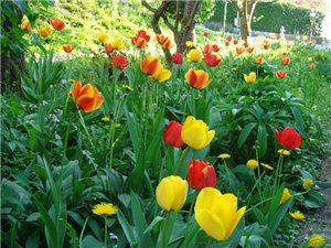 世界上所有花的花语 花语大全带图片 花语大全及图片
