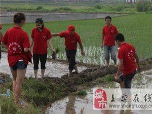 上栗县志愿者开展义务插秧活动