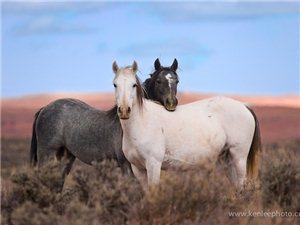 温暖人心的动物伙伴照片