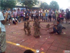 看猴看猴!今天中午下班澳城南路口��了好多人看猴