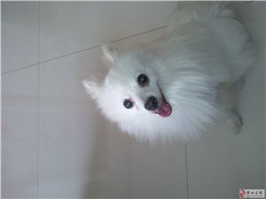 出售宠物狗