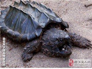 [灌水]世界上最丑的20种动物