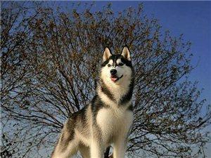 [�D�N][�D�N]世界名犬欣�p-�D集