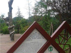 蓬溪:中���t海的定海神�――千年�跄�