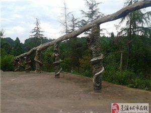 蓬溪:中国红海的定海神针――千年乌木