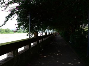 夹江县之木城镇印象
