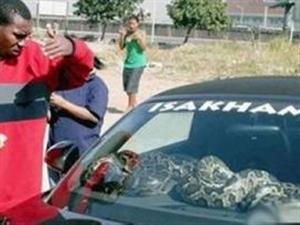 [转贴]车主为防盗在车内养条巨蟒 乃们怎么看?