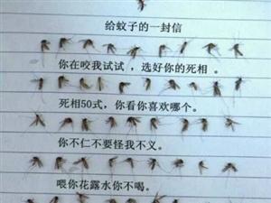 给蚊子,的信!