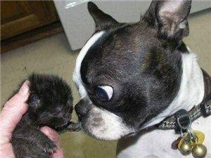 几度萌到让你们崩溃的动物们,尼玛的太搞笑了