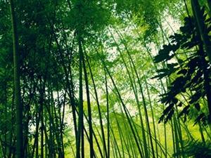 [原创]9月13日感受西湖的秋韵和安吉诗情画意的清净