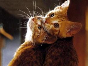 动物情侣照是这样的绝妙