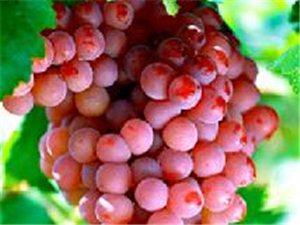 夏季巧吃葡萄,吃出健康
