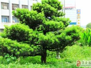 绿树成阴、花草齐齐