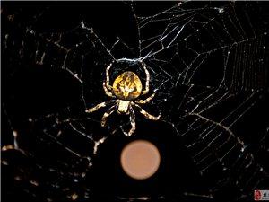 [原创]蜘蛛与月亮