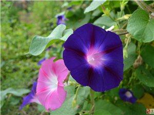 [原创]漂亮的花卉