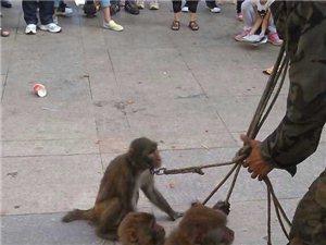 这是在虐待小动物吗?大家以后不要再围观了