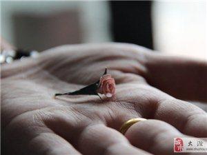 送你玫瑰,手有余胶!!