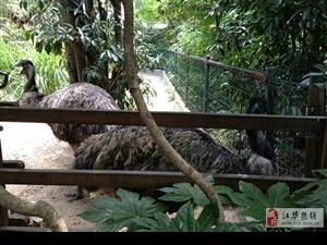 上海动物园的动物们,你咋这么享受!