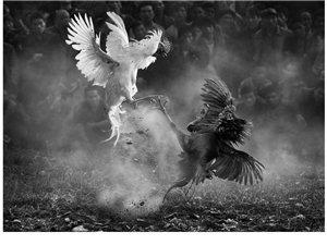 香港摄友拍摄的黔东南作品获国际大奖