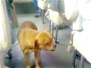 小狗为找主人在车站苦等15天 每趟客车嗅一遍