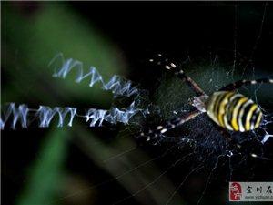 会写英文的蜘蛛