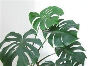 这5种植物最能吸毒气 一定要选盆搬回家