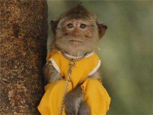 """桂林一小猴子被""""出租照相""""[组图]"""