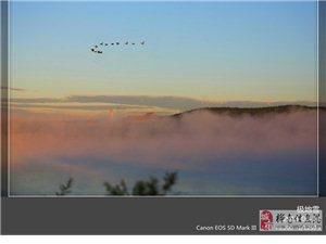 候鸟开始过路向阳湖