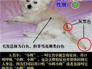 """??有奖,请岳池爱心朋友协助寻找狗狗""""小辉"""""""
