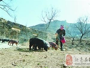 焦作一山村野生动物频出没 村民仿佛活在动物园
