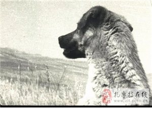 《第一只狗》――tengqin