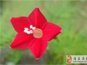 野三坡原野山花(图集)