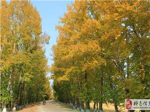 秋天溜溜向阳山心情会很快乐滴