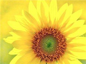 做个内心向阳的人。 不忧伤,不心急。 坚强、向上,靠近阳光。
