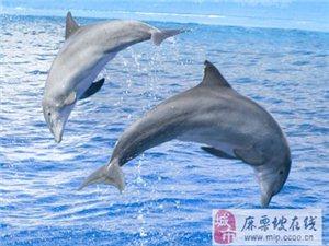 科学家:海豚智商与鸡相近 聪明程度被夸大