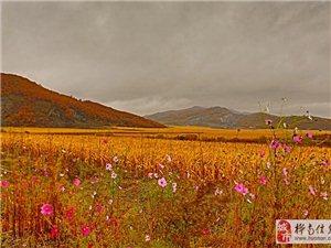 一路秋景金黄色