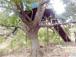 蒙山脚下――树上餐厅
