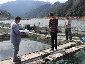 齐溪整治网箱养鱼 力保源头水质