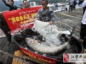 慈利现上百斤雄鱼王 将制世界最大剁椒鱼头